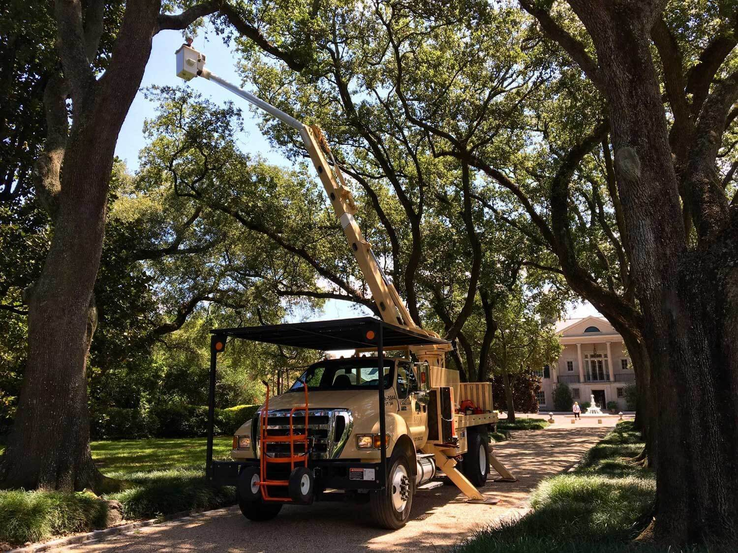 Commercial Tree Service-Loxahatchee Tree Trimming and Tree Removal Services-We Offer Tree Trimming Services, Tree Removal, Tree Pruning, Tree Cutting, Residential and Commercial Tree Trimming Services, Storm Damage, Emergency Tree Removal, Land Clearing, Tree Companies, Tree Care Service, Stump Grinding, and we're the Best Tree Trimming Company Near You Guaranteed!