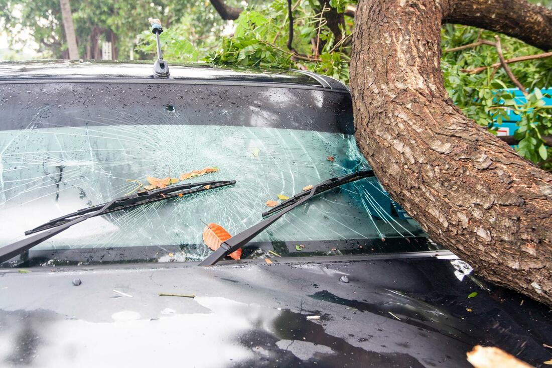 Emergency Tree Removal-Loxahatchee Tree Trimming and Tree Removal Services-We Offer Tree Trimming Services, Tree Removal, Tree Pruning, Tree Cutting, Residential and Commercial Tree Trimming Services, Storm Damage, Emergency Tree Removal, Land Clearing, Tree Companies, Tree Care Service, Stump Grinding, and we're the Best Tree Trimming Company Near You Guaranteed!