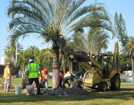 Palm Tree Trimming & Palm Tree Removal-Loxahatchee Tree Trimming and Tree Removal Services-We Offer Tree Trimming Services, Tree Removal, Tree Pruning, Tree Cutting, Residential and Commercial Tree Trimming Services, Storm Damage, Emergency Tree Removal, Land Clearing, Tree Companies, Tree Care Service, Stump Grinding, and we're the Best Tree Trimming Company Near You Guaranteed!