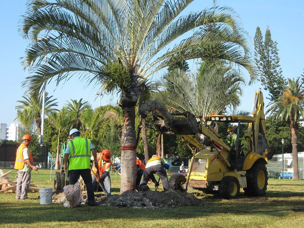 Palm Tree Removal copy-Loxahatchee Tree Trimming and Tree Removal Services-We Offer Tree Trimming Services, Tree Removal, Tree Pruning, Tree Cutting, Residential and Commercial Tree Trimming Services, Storm Damage, Emergency Tree Removal, Land Clearing, Tree Companies, Tree Care Service, Stump Grinding, and we're the Best Tree Trimming Company Near You Guaranteed!