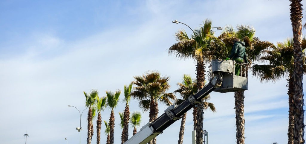 Palm Tree Trimming-Loxahatchee Tree Trimming and Tree Removal Services-We Offer Tree Trimming Services, Tree Removal, Tree Pruning, Tree Cutting, Residential and Commercial Tree Trimming Services, Storm Damage, Emergency Tree Removal, Land Clearing, Tree Companies, Tree Care Service, Stump Grinding, and we're the Best Tree Trimming Company Near You Guaranteed!