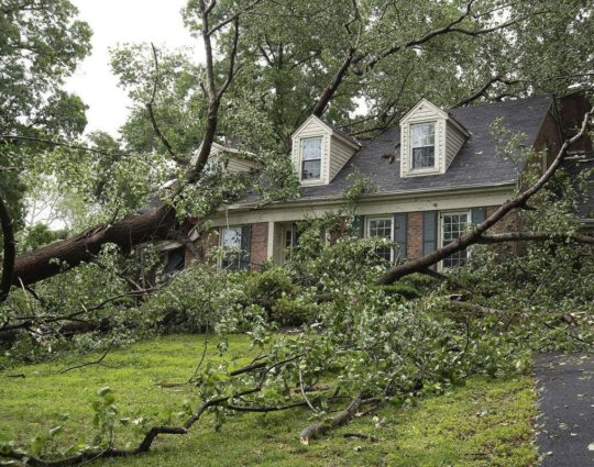 Storm Damage-Loxahatchee Tree Trimming and Tree Removal Services-We Offer Tree Trimming Services, Tree Removal, Tree Pruning, Tree Cutting, Residential and Commercial Tree Trimming Services, Storm Damage, Emergency Tree Removal, Land Clearing, Tree Companies, Tree Care Service, Stump Grinding, and we're the Best Tree Trimming Company Near You Guaranteed!