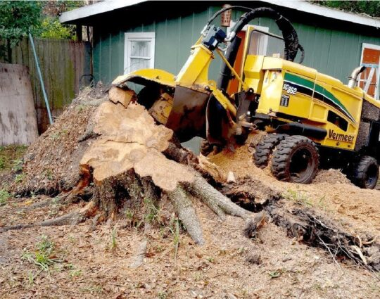 Stump Grinding & Removal-Loxahatchee Tree Trimming and Tree Removal Services-We Offer Tree Trimming Services, Tree Removal, Tree Pruning, Tree Cutting, Residential and Commercial Tree Trimming Services, Storm Damage, Emergency Tree Removal, Land Clearing, Tree Companies, Tree Care Service, Stump Grinding, and we're the Best Tree Trimming Company Near You Guaranteed!