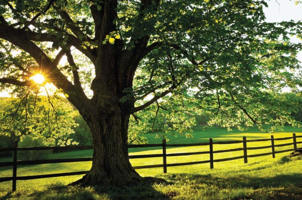 Tree Healthcare-Loxahatchee Tree Trimming and Tree Removal Services-We Offer Tree Trimming Services, Tree Removal, Tree Pruning, Tree Cutting, Residential and Commercial Tree Trimming Services, Storm Damage, Emergency Tree Removal, Land Clearing, Tree Companies, Tree Care Service, Stump Grinding, and we're the Best Tree Trimming Company Near You Guaranteed!