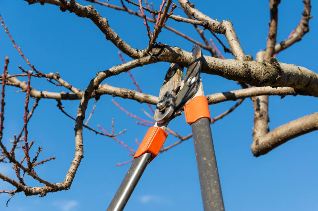 Tree Pruning-Loxahatchee Tree Trimming and Tree Removal Services-We Offer Tree Trimming Services, Tree Removal, Tree Pruning, Tree Cutting, Residential and Commercial Tree Trimming Services, Storm Damage, Emergency Tree Removal, Land Clearing, Tree Companies, Tree Care Service, Stump Grinding, and we're the Best Tree Trimming Company Near You Guaranteed!