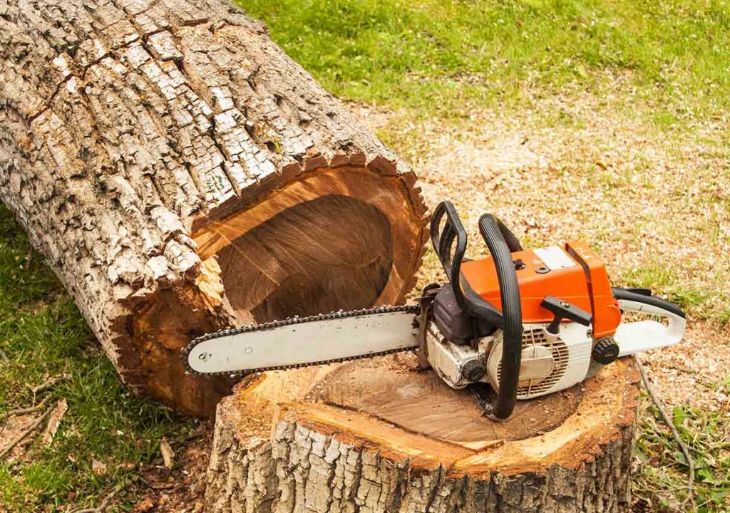 Tree Pruning & Tree Removal-Loxahatchee Tree Trimming and Tree Removal Services-We Offer Tree Trimming Services, Tree Removal, Tree Pruning, Tree Cutting, Residential and Commercial Tree Trimming Services, Storm Damage, Emergency Tree Removal, Land Clearing, Tree Companies, Tree Care Service, Stump Grinding, and we're the Best Tree Trimming Company Near You Guaranteed!