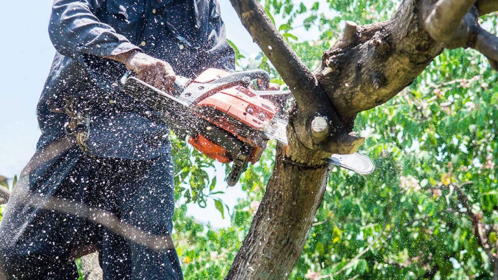Tree Trimming-Loxahatchee Tree Trimming and Tree Removal Services-We Offer Tree Trimming Services, Tree Removal, Tree Pruning, Tree Cutting, Residential and Commercial Tree Trimming Services, Storm Damage, Emergency Tree Removal, Land Clearing, Tree Companies, Tree Care Service, Stump Grinding, and we're the Best Tree Trimming Company Near You Guaranteed!