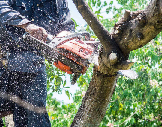 Tree Trimming Services-Loxahatchee Tree Trimming and Tree Removal Services-We Offer Tree Trimming Services, Tree Removal, Tree Pruning, Tree Cutting, Residential and Commercial Tree Trimming Services, Storm Damage, Emergency Tree Removal, Land Clearing, Tree Companies, Tree Care Service, Stump Grinding, and we're the Best Tree Trimming Company Near You Guaranteed!